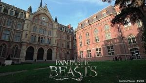 Animaux Fantastiques, Harry Potter, Université Catholique, Lille, David Yates